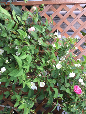 iphone/image-20170523230102.png