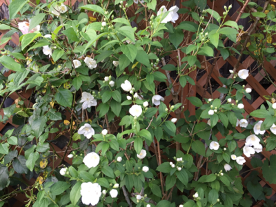 iphone/image-20170523230743.png